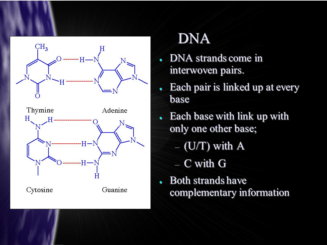 DNA ● DNA strands come in interwoven pairs.