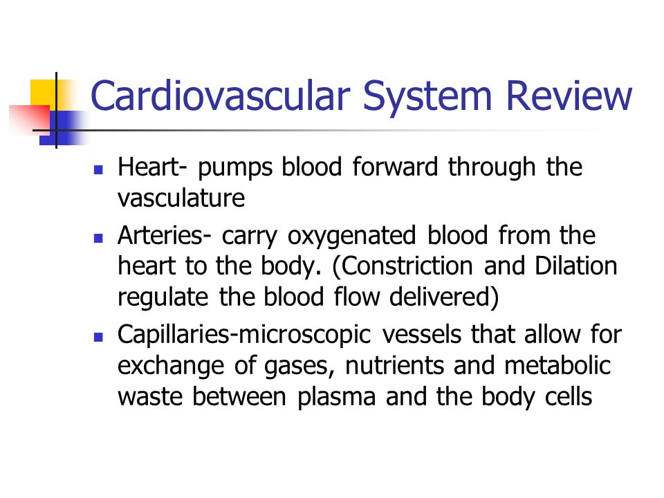 Cardiovascular System Review Heart- pumps blood forward through the vasculature Arteries- carry oxygenated blood from the heart to the body.