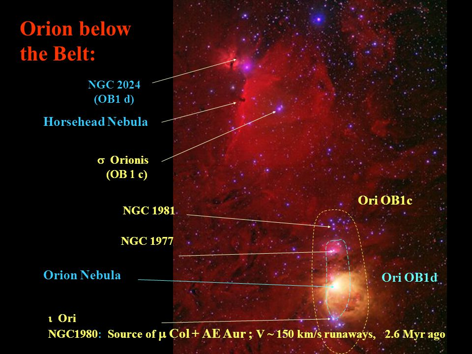 Orion below the Belt: Horsehead Nebula Orion Nebula NGC 2024 (OB1 d)  Orionis (  c) NGC 1977  Ori NGC1980: Source of  Col + AE Aur ; V ~ 150 km/s runaways, 2.6 Myr ago NGC 1981 Ori OB1c Ori OB1d