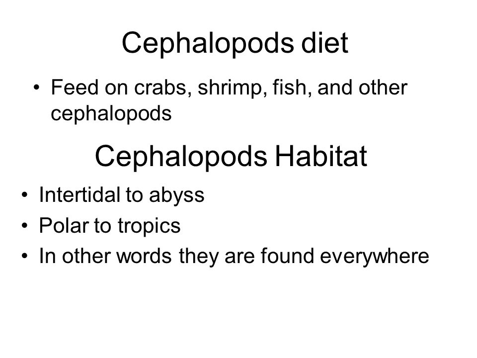 Cephalopods diet Feed on crabs, shrimp, fish, and other cephalopods Cephalopods Habitat Intertidal to abyss Polar to tropics In other words they are found everywhere