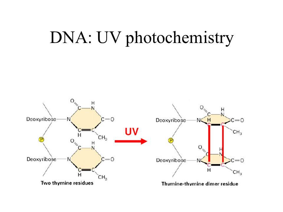 DNA: UV photochemistry