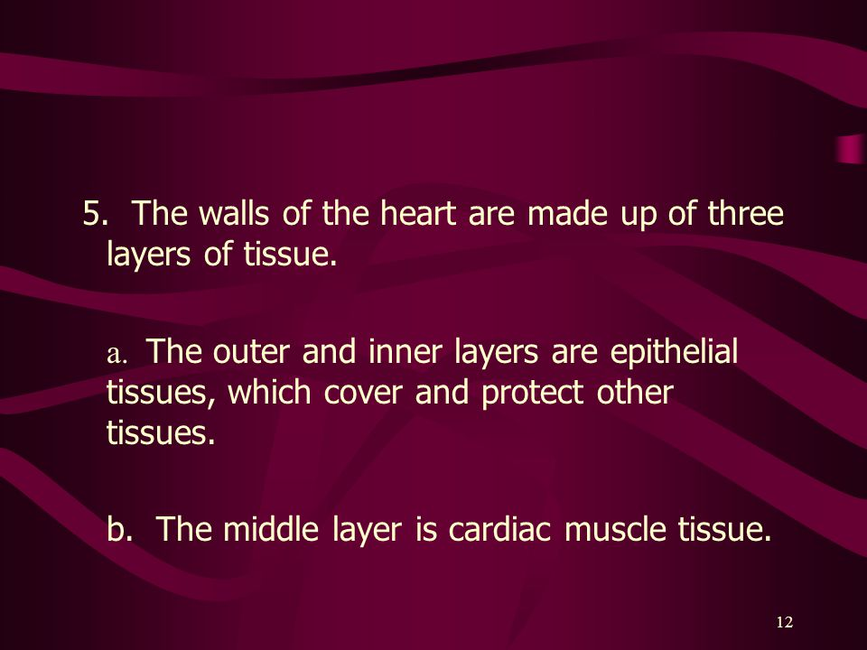 12 5.The walls of the heart are made up of three layers of tissue.