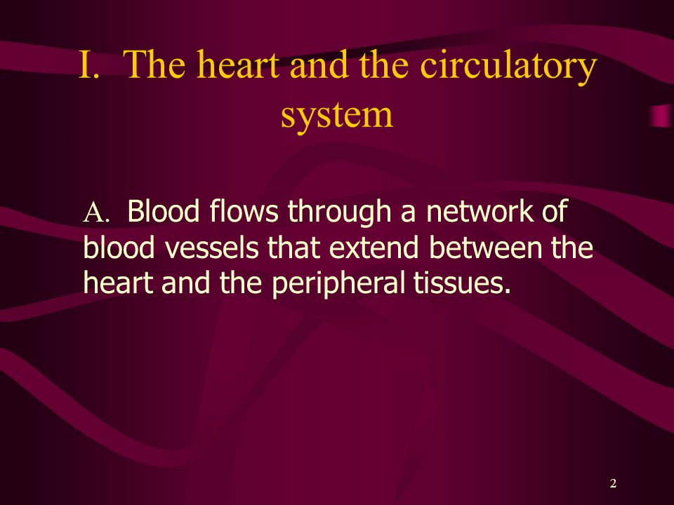2 I.The heart and the circulatory system A.