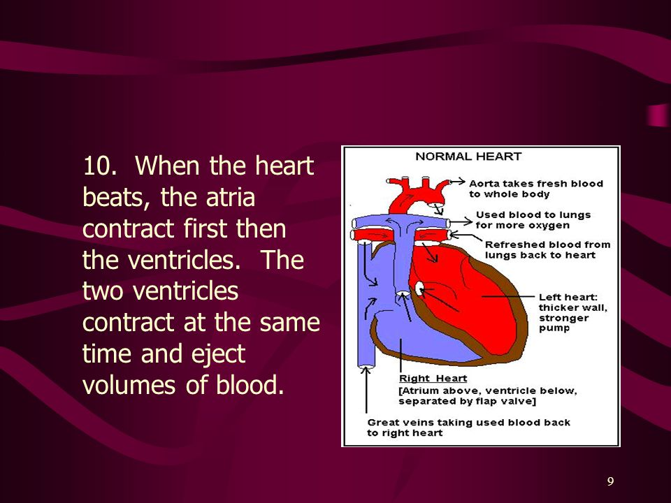 9 10.When the heart beats, the atria contract first then the ventricles.