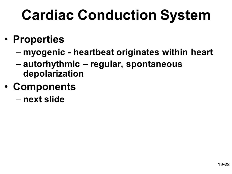 19-28 Cardiac Conduction System Properties –myogenic - heartbeat originates within heart –autorhythmic – regular, spontaneous depolarization Component