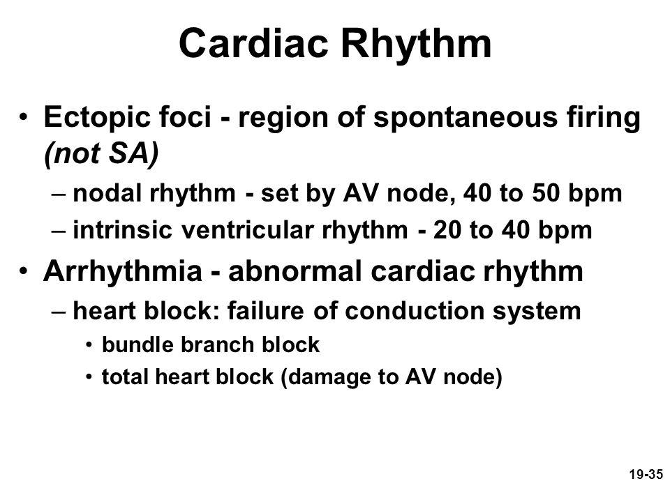 19-35 Cardiac Rhythm Ectopic foci - region of spontaneous firing (not SA) –nodal rhythm - set by AV node, 40 to 50 bpm –intrinsic ventricular rhythm -