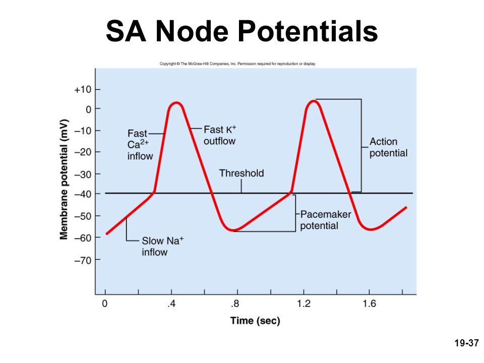19-37 SA Node Potentials