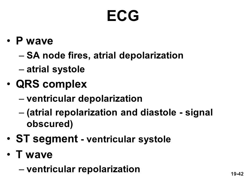 19-42 ECG P wave –SA node fires, atrial depolarization –atrial systole QRS complex –ventricular depolarization –(atrial repolarization and diastole -