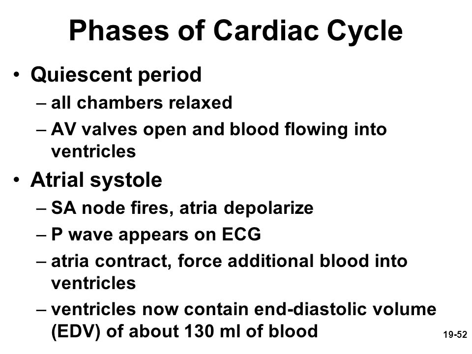 19-52 Phases of Cardiac Cycle Quiescent period –all chambers relaxed –AV valves open and blood flowing into ventricles Atrial systole –SA node fires,