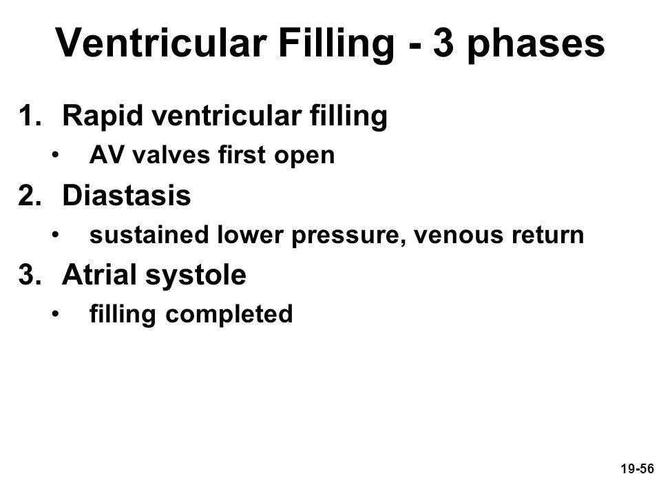 19-56 Ventricular Filling - 3 phases 1.Rapid ventricular filling AV valves first open 2.Diastasis sustained lower pressure, venous return 3.Atrial sys