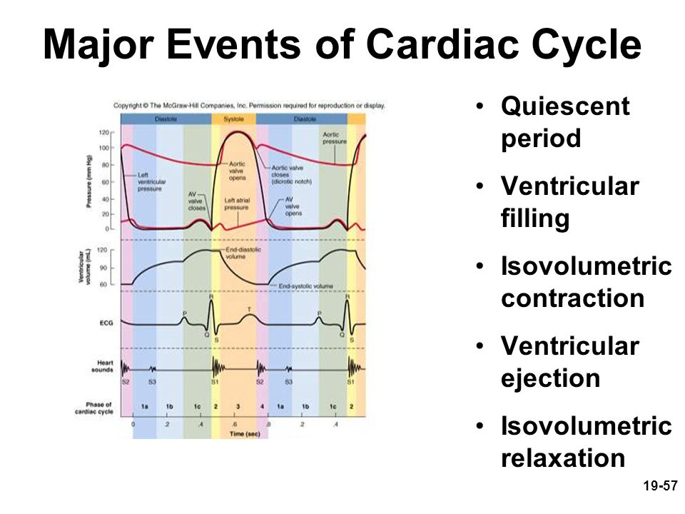 19-57 Major Events of Cardiac Cycle Quiescent period Ventricular filling Isovolumetric contraction Ventricular ejection Isovolumetric relaxation