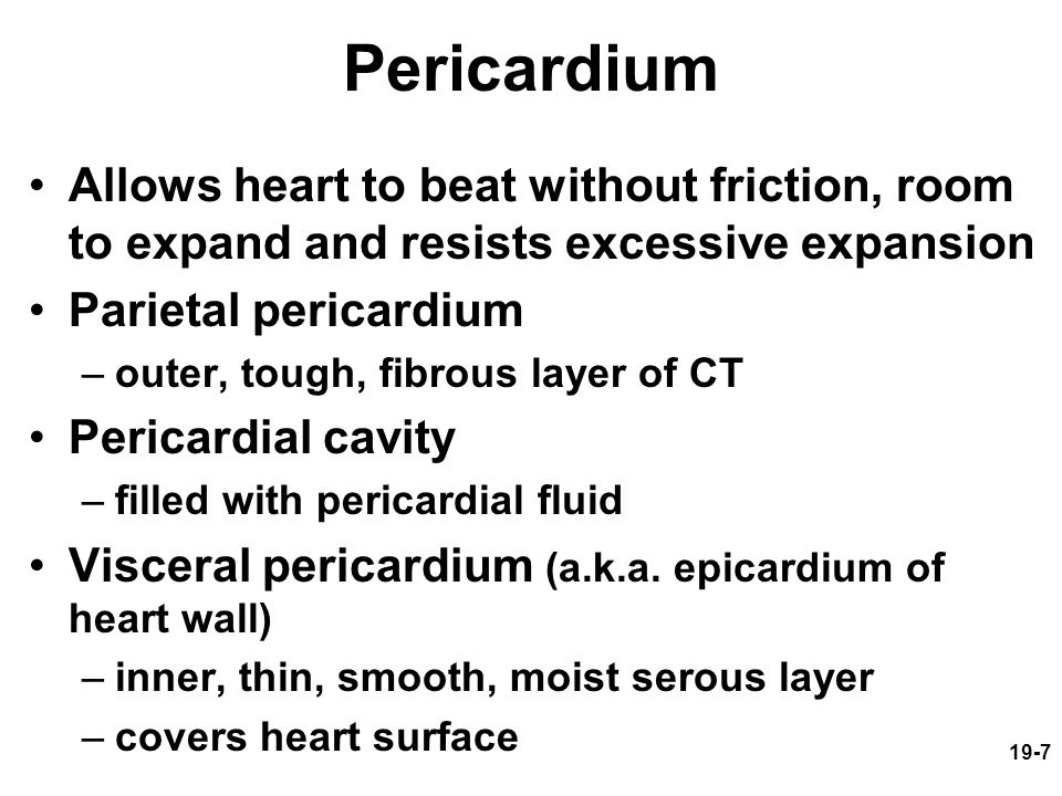 19-7 Pericardium Allows heart to beat without friction, room to expand and resists excessive expansion Parietal pericardium –outer, tough, fibrous lay