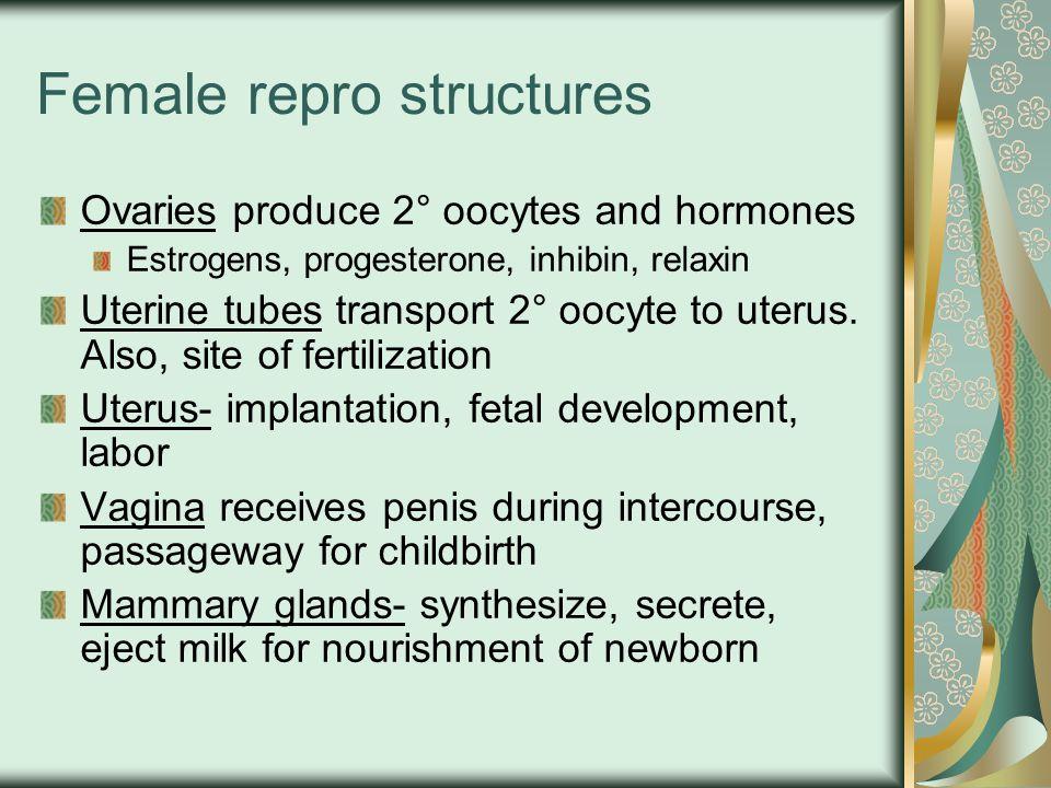 Female repro structures Ovaries produce 2° oocytes and hormones Estrogens, progesterone, inhibin, relaxin Uterine tubes transport 2° oocyte to uterus.