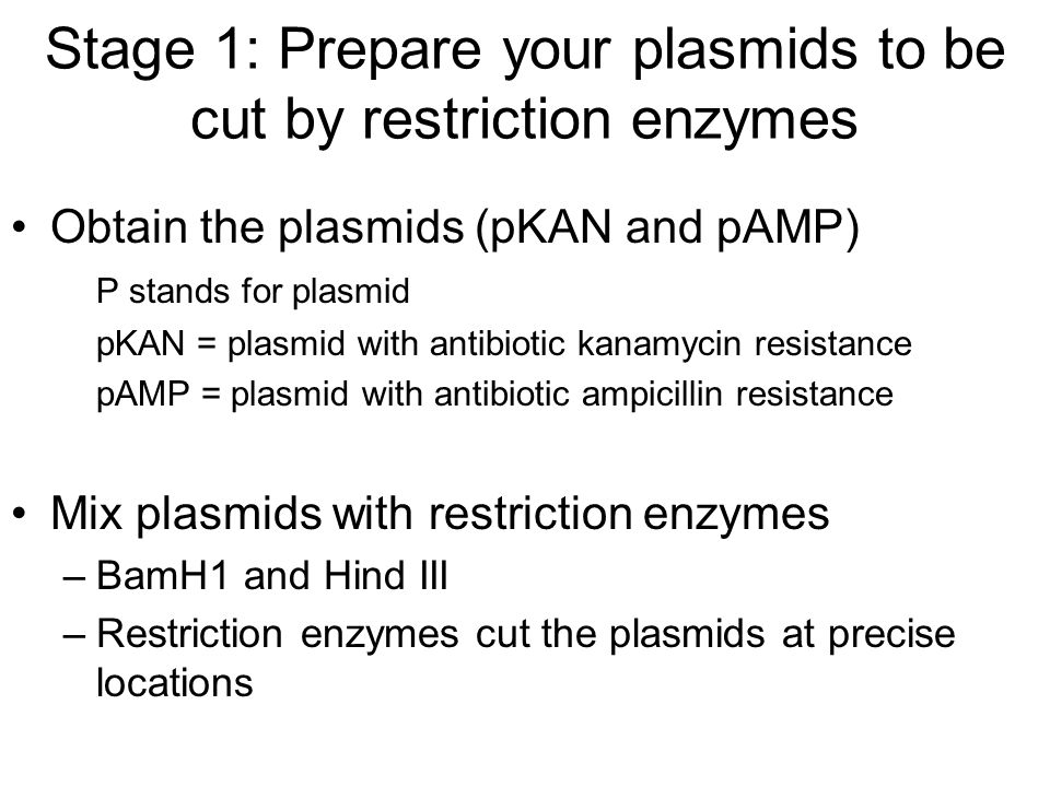 Stage 1: Prepare your plasmids to be cut by restriction enzymes Obtain the plasmids (pKAN and pAMP) P stands for plasmid pKAN = plasmid with antibiotic kanamycin resistance pAMP = plasmid with antibiotic ampicillin resistance Mix plasmids with restriction enzymes –B–BamH1 and Hind III –R–Restriction enzymes cut the plasmids at precise locations