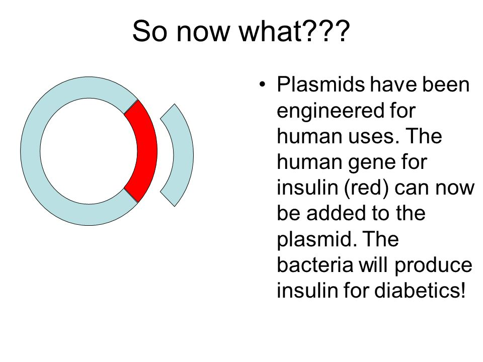 So now what . Plasmids have been engineered for human uses.