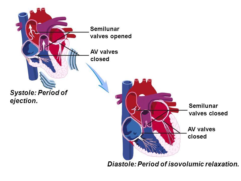 Semilunar valves opened AV valves closed Systole: Period of ejection. Semilunar valves closed AV valves closed Diastole: Period of isovolumic relaxati