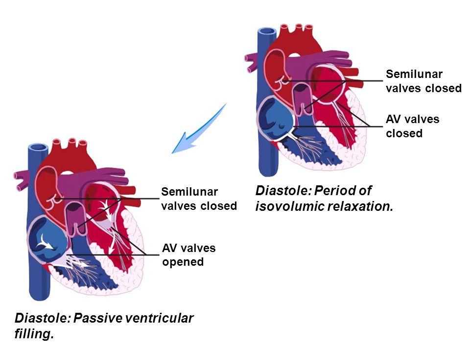 Semilunar valves closed AV valves closed Semilunar valves closed AV valves opened Diastole: Passive ventricular filling. Diastole: Period of isovolumi