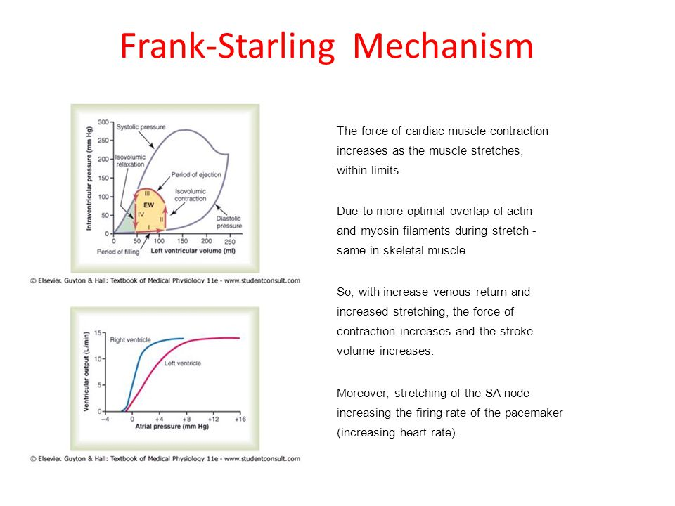 Frank-Starling Mechanism The force of cardiac muscle contraction increases as the muscle stretches, within limits. Due to more optimal overlap of acti