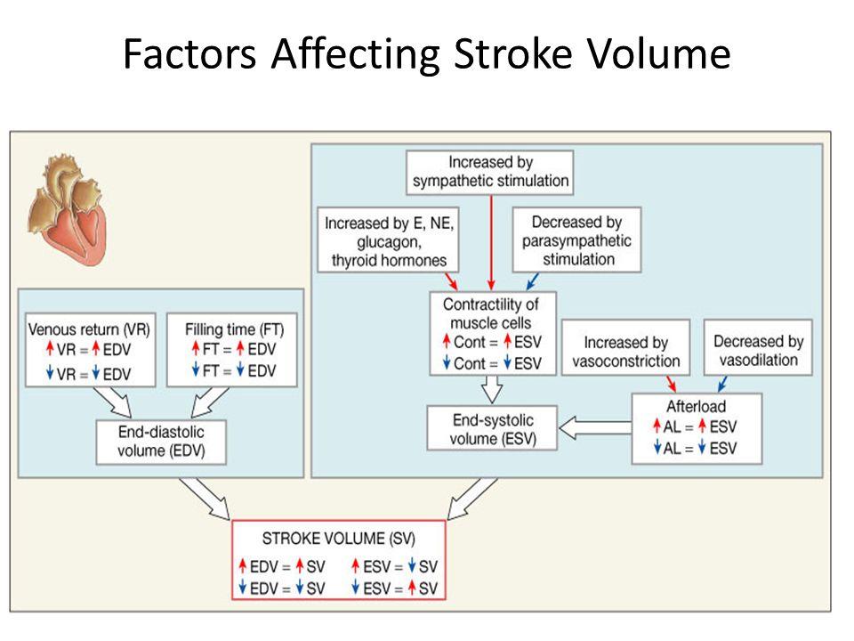 Factors Affecting Stroke Volume