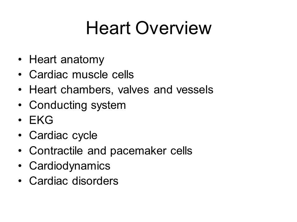 Cardiac Cells vs. Skeletal Fibers Table 20-1