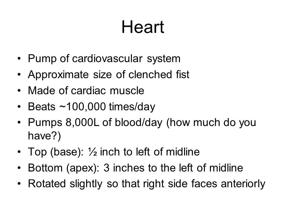 Specific Heart Anatomy Anterior View Posterior View