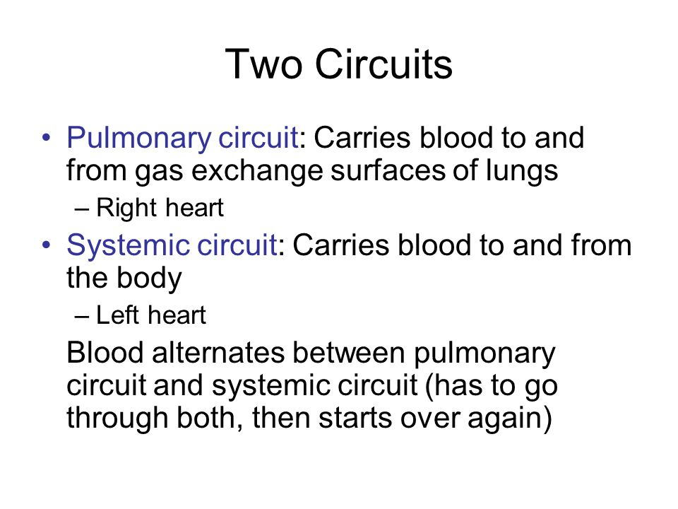 Pulmonary Circuit To RA from superior and inferior vena cavae RA through open tricuspid valve to RV Conus arteriosus (superior right ventricle) through pulmonary valve to pulmonary trunk Pulmonary trunk divides into left and right pulmonary arteries, to right and left lungs, respectively
