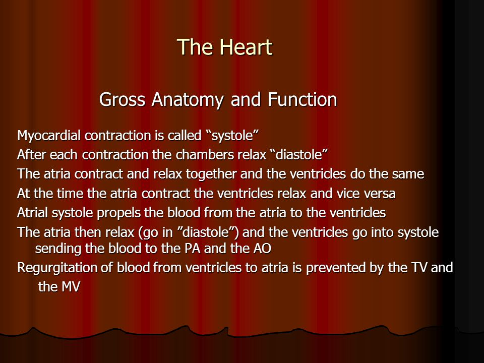 """The Heart The Heart Gross Anatomy and Function Gross Anatomy and Function Myocardial contraction is called """"systole"""" After each contraction the chambe"""