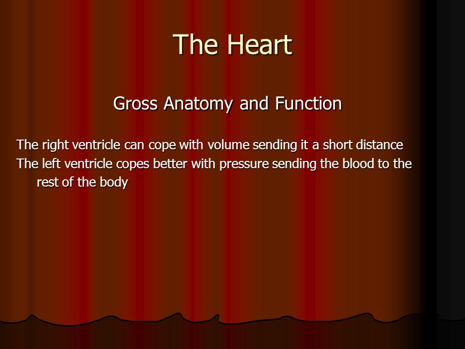 The Heart Gross Anatomy and Function Gross Anatomy and Function The right ventricle can cope with volume sending it a short distance The left ventricl