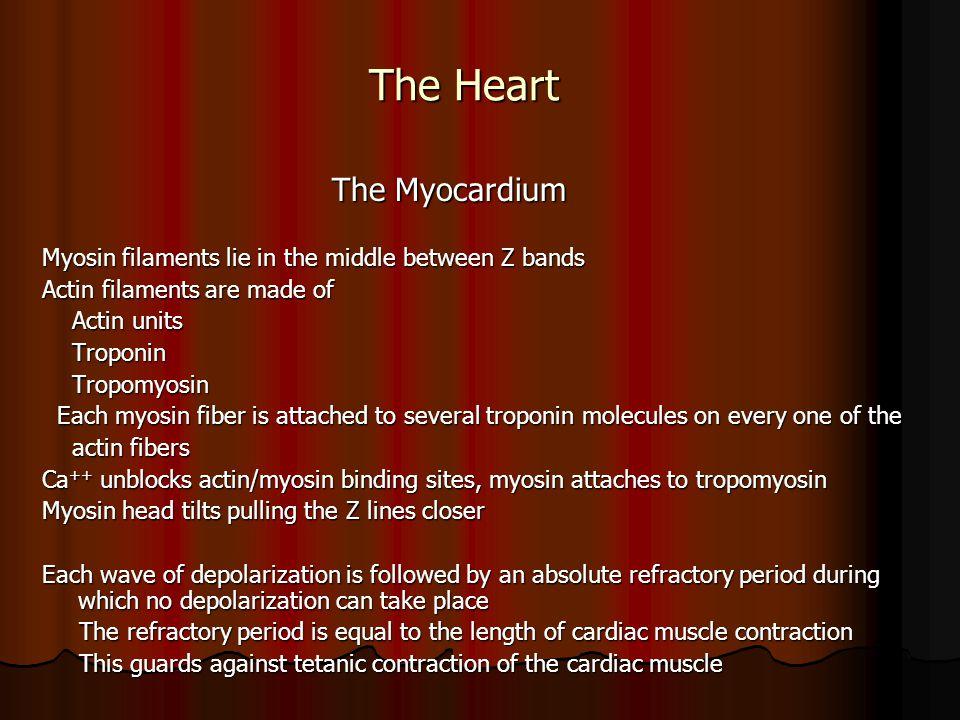 The Heart The Myocardium The Myocardium Myosin filaments lie in the middle between Z bands Actin filaments are made of Actin units Actin units Troponi