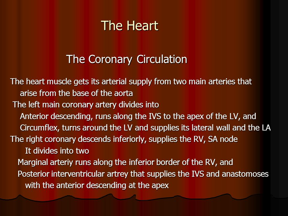 The Heart The Coronary Circulation The Coronary Circulation The heart muscle gets its arterial supply from two main arteries that arise from the base