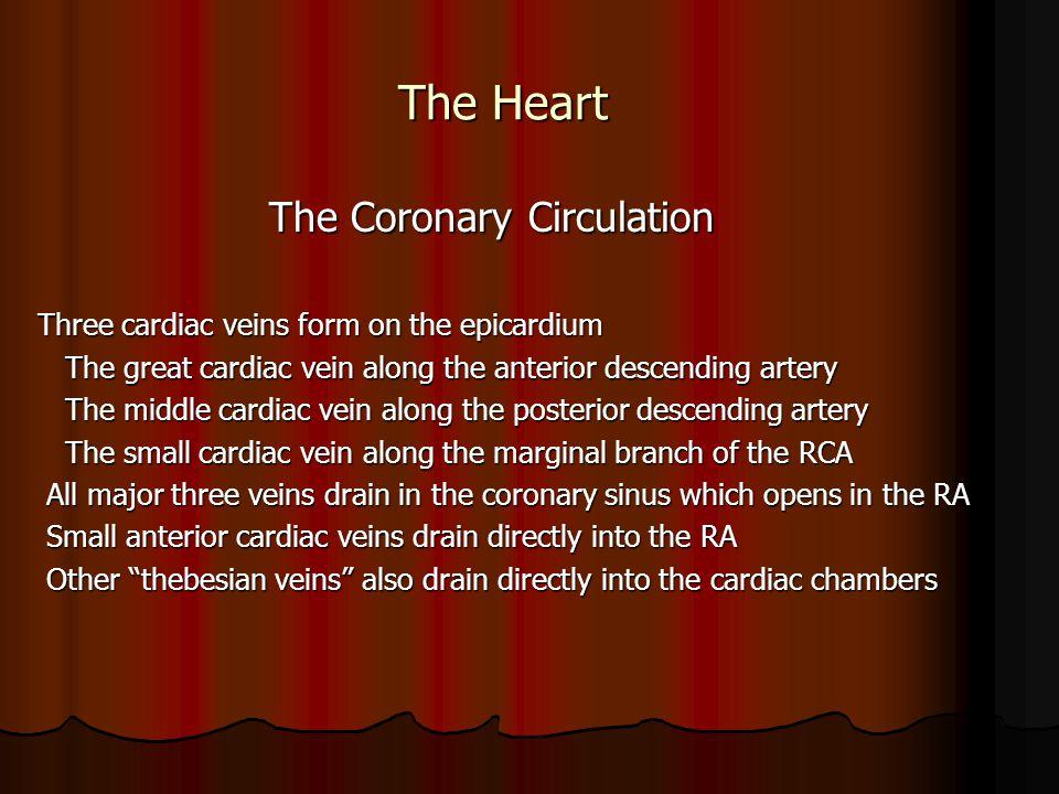 The Heart The Coronary Circulation The Coronary Circulation Three cardiac veins form on the epicardium The great cardiac vein along the anterior desce