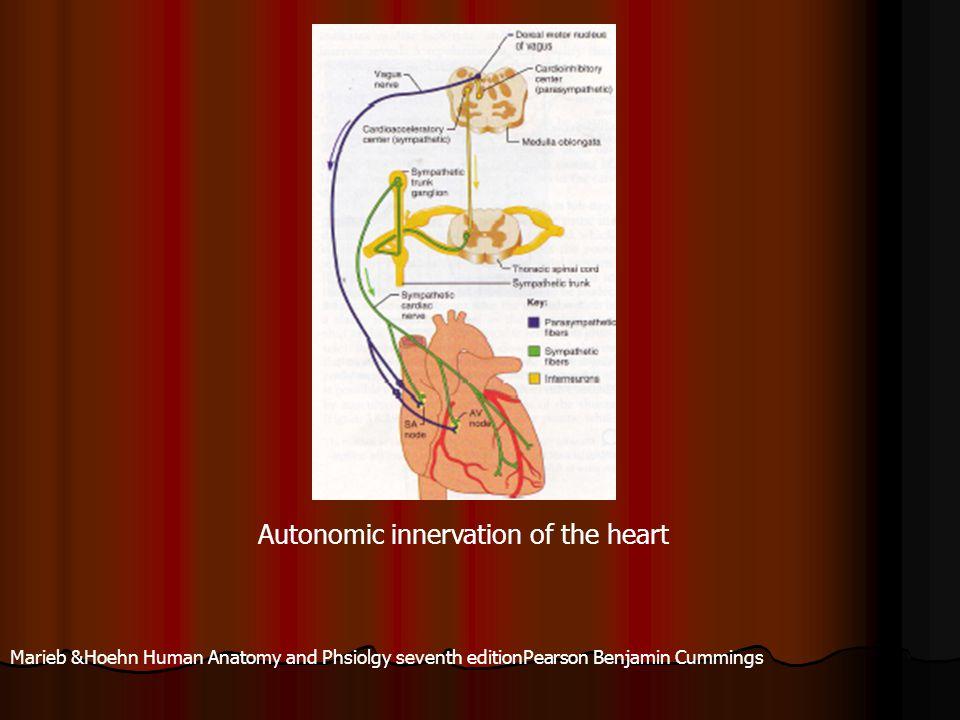 Autonomic innervation of the heart Marieb &Hoehn Human Anatomy and Phsiolgy seventh editionPearson Benjamin Cummings