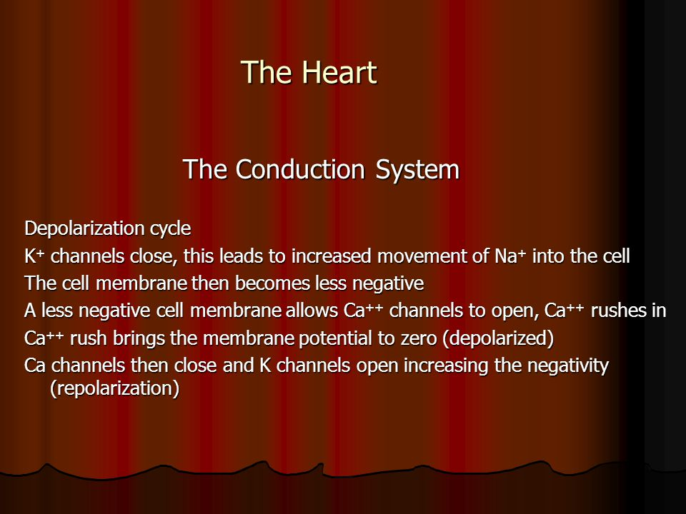 The Heart The Conduction System The Conduction System Depolarization cycle K + channels close, this leads to increased movement of Na + into the cell
