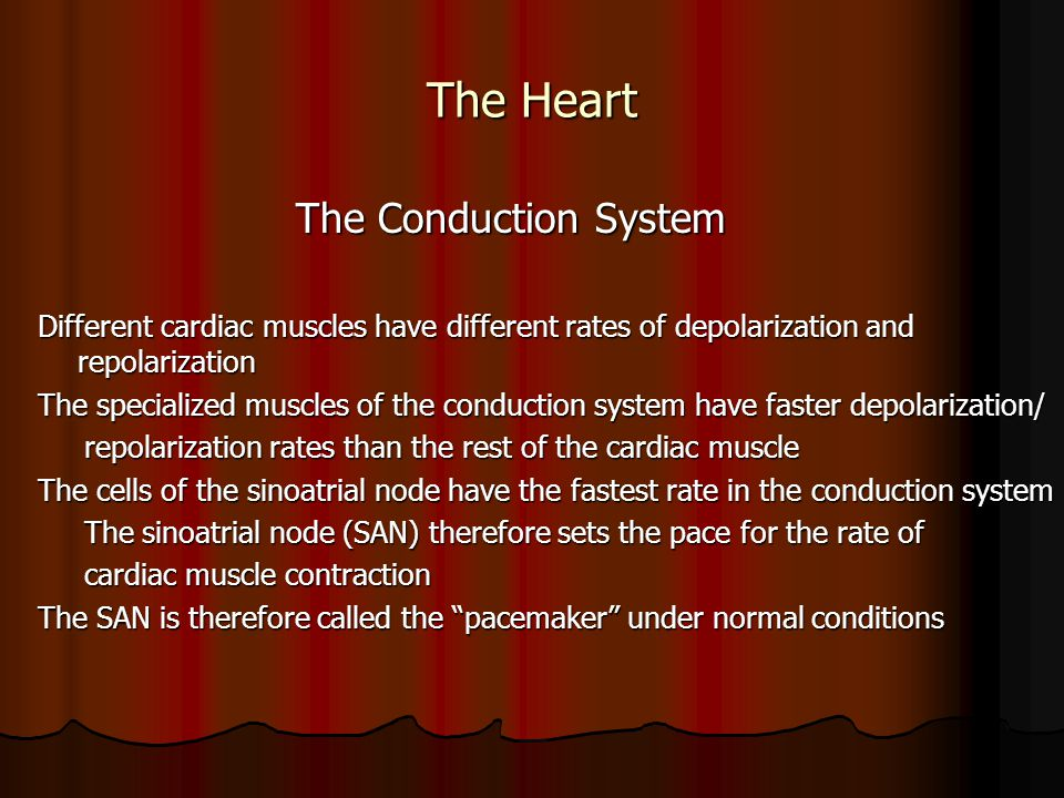 The Heart The Conduction System The Conduction System Different cardiac muscles have different rates of depolarization and repolarization The speciali