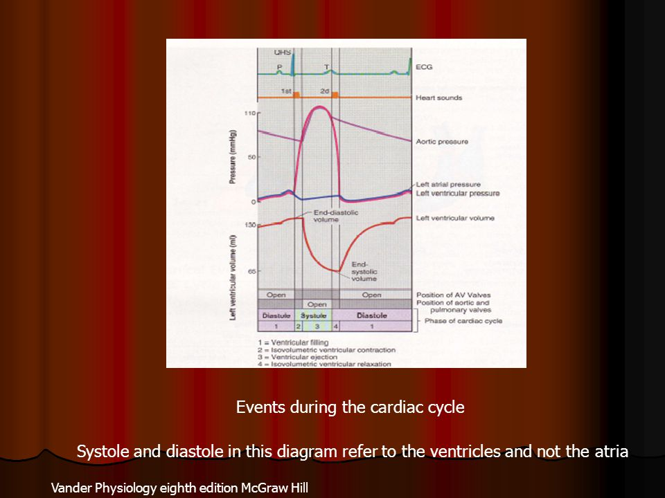 Vander Physiology eighth edition McGraw Hill Events during the cardiac cycle Systole and diastole in this diagram refer to the ventricles and not the