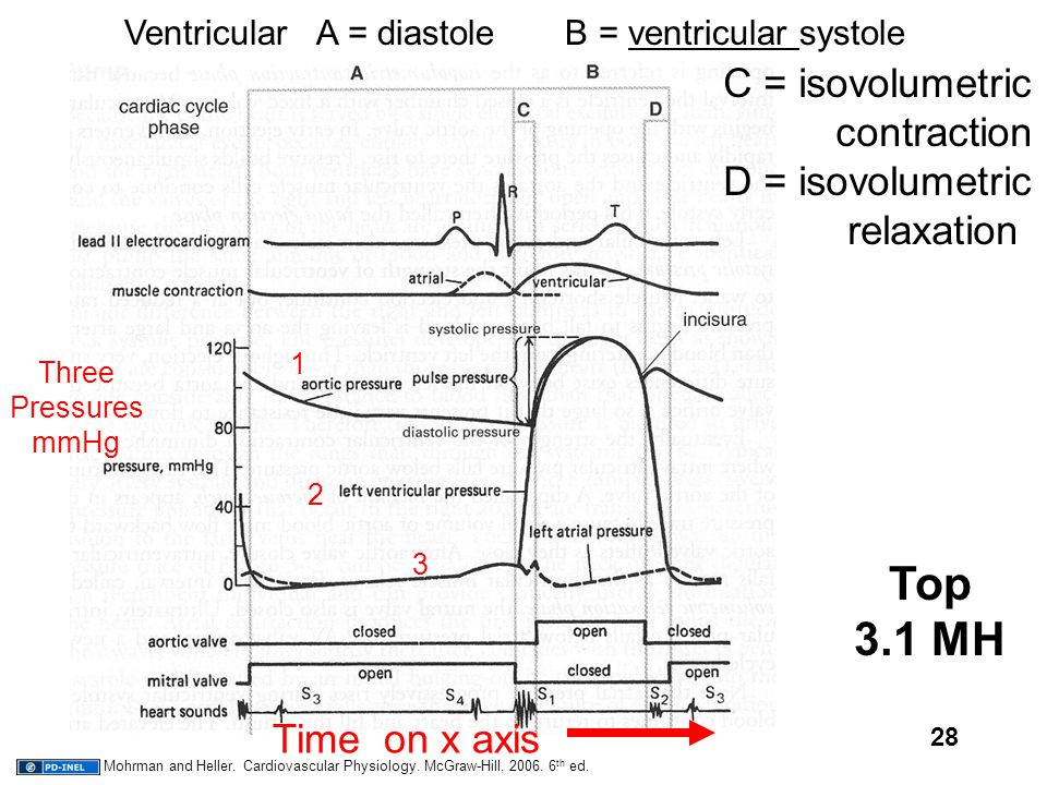 28 Top 3.1 MH C = isovolumetric contraction D = isovolumetric relaxation Ventricular A = diastole B = ventricular systole Time on x axis 2 1 3 Three P