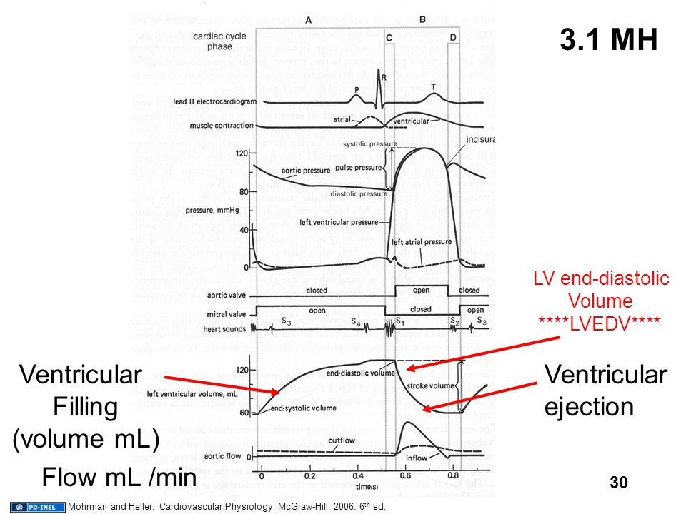 30 3.1 MH Ventricular Filling (volume mL) Ventricular ejection Flow mL /min LV end-diastolic Volume ****LVEDV**** Mohrman and Heller. Cardiovascular P