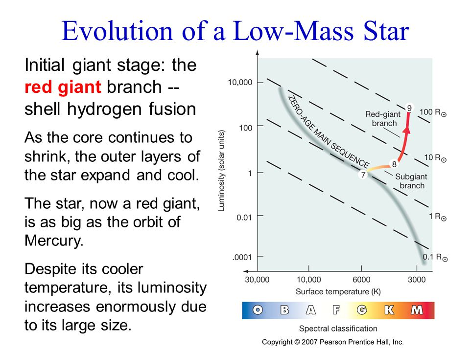 Initial giant stage: the red giant branch -- shell hydrogen fusion Evolution of a Low-Mass Star As the core continues to shrink, the outer layers of t