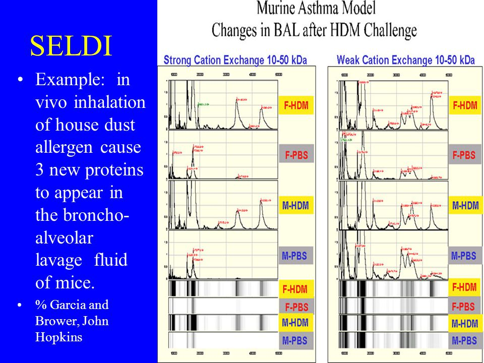 SELDI Example: in vivo inhalation of house dust allergen cause 3 new proteins to appear in the broncho- alveolar lavage fluid of mice.