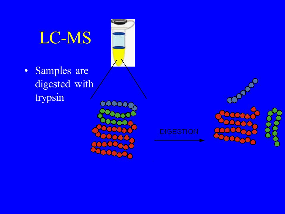 LC-MS Samples are digested with trypsin