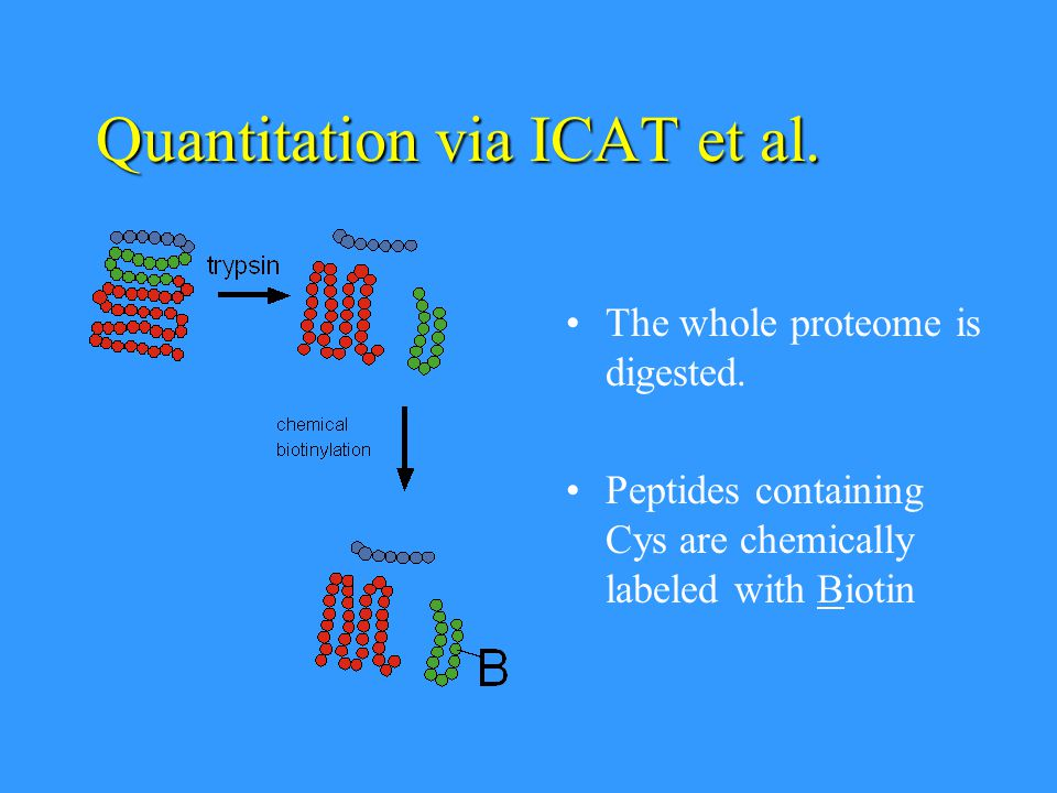 Quantitation via ICAT et al. The whole proteome is digested. Peptides containing Cys are chemically labeled with Biotin