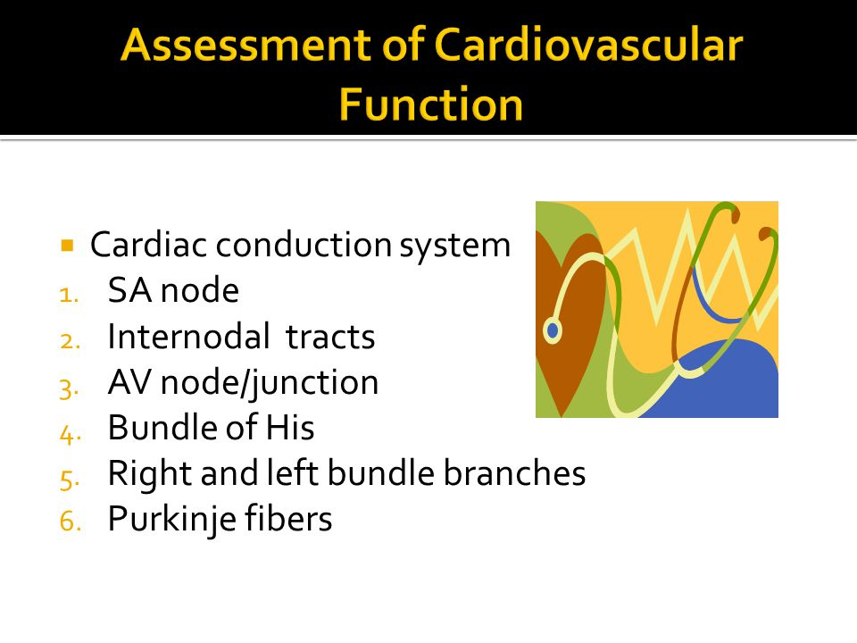  Cardiac conduction system 1. SA node 2. Internodal tracts 3. AV node/junction 4. Bundle of His 5. Right and left bundle branches 6. Purkinje fibers
