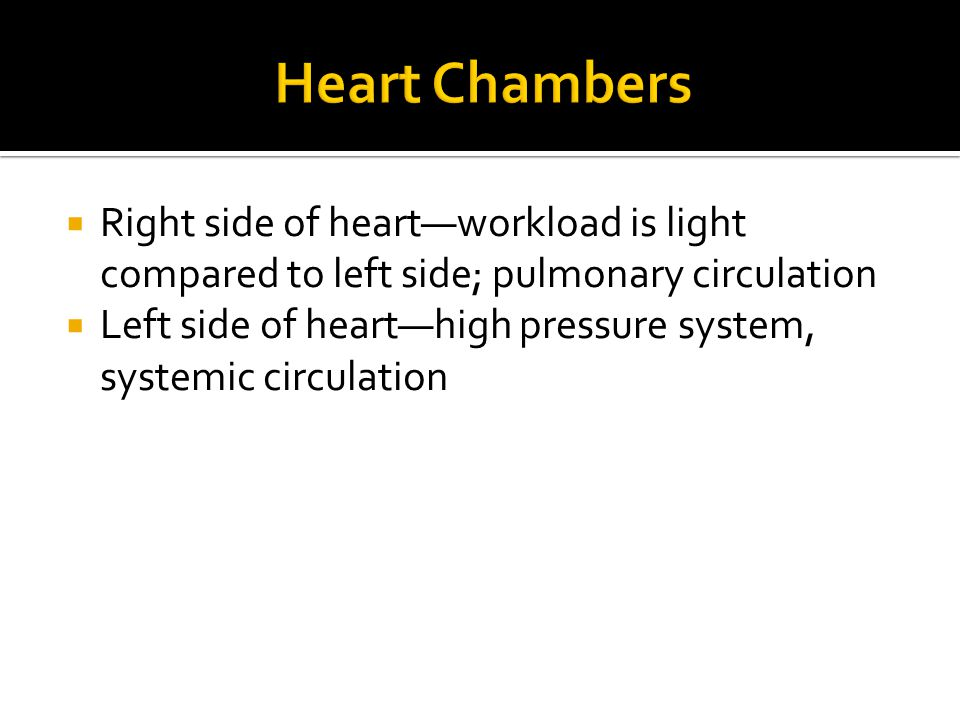  Right side of heart—workload is light compared to left side; pulmonary circulation  Left side of heart—high pressure system, systemic circulation