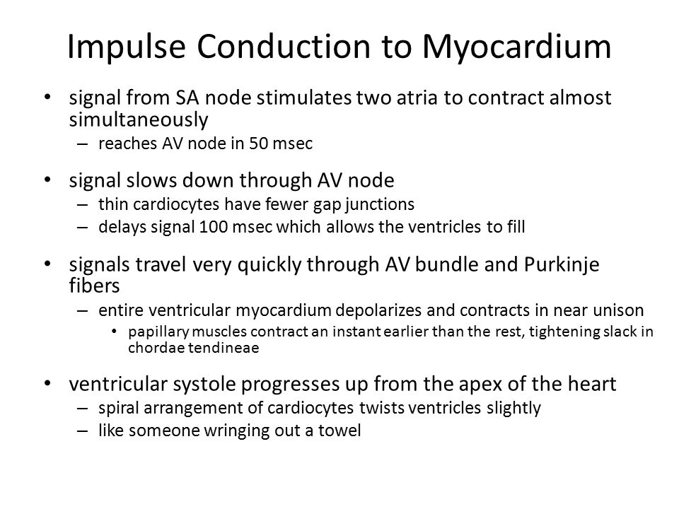 Impulse Conduction to Myocardium signal from SA node stimulates two atria to contract almost simultaneously – reaches AV node in 50 msec signal slows
