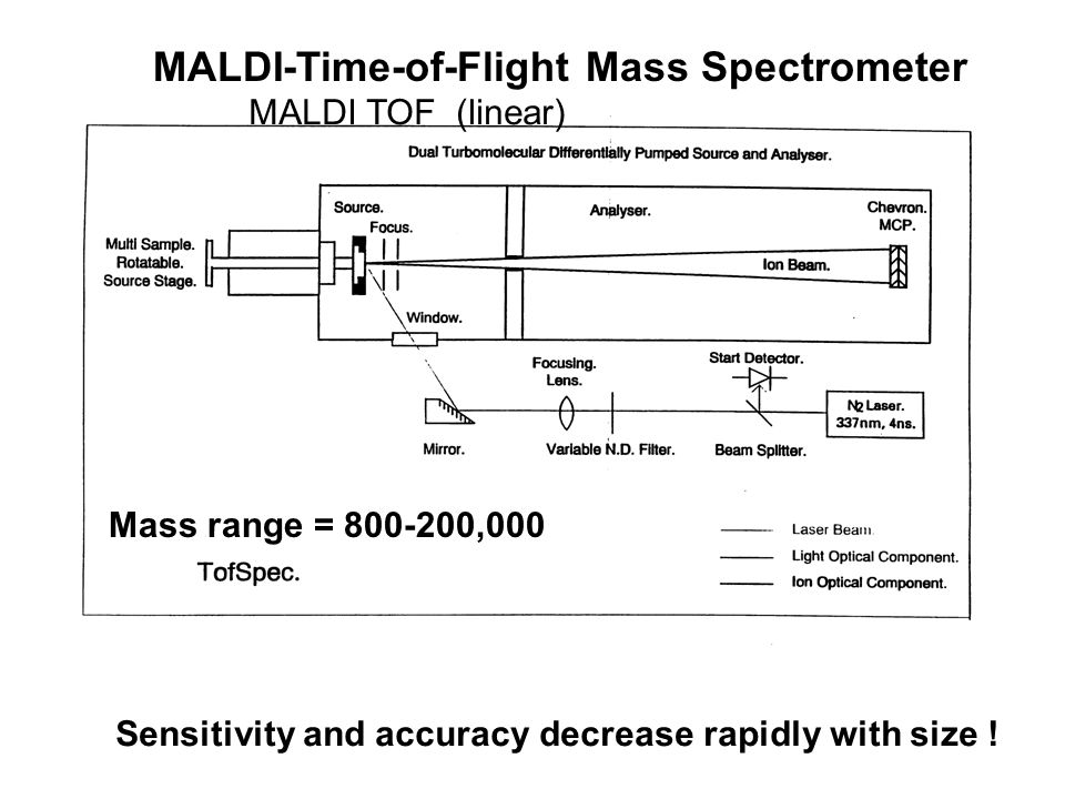 MALDI-Time-of-Flight Mass Spectrometer Mass range = 800-200,000 Sensitivity and accuracy decrease rapidly with size .
