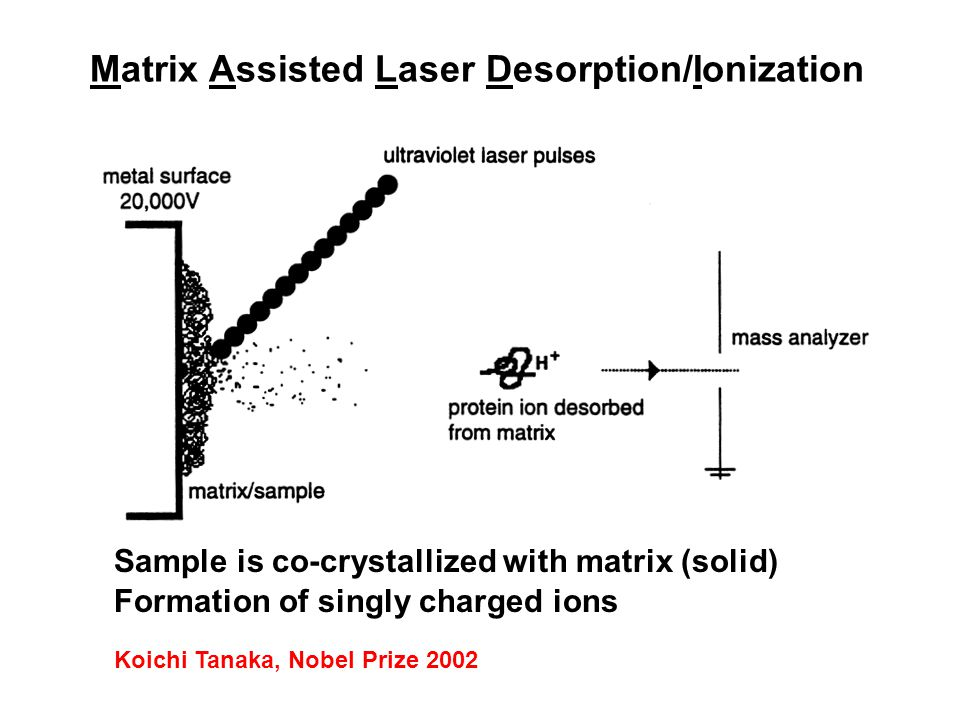 Matrix Assisted Laser Desorption/Ionization Formation of singly charged ions Sample is co-crystallized with matrix (solid) Koichi Tanaka, Nobel Prize 2002