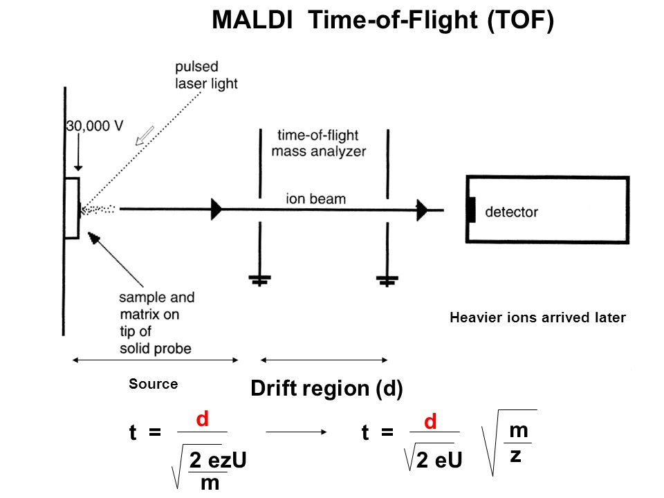 MALDI Time-of-Flight (TOF) Drift region (d) Source Heavier ions arrived later d m 2 ezU t = d 2 eU t = m z