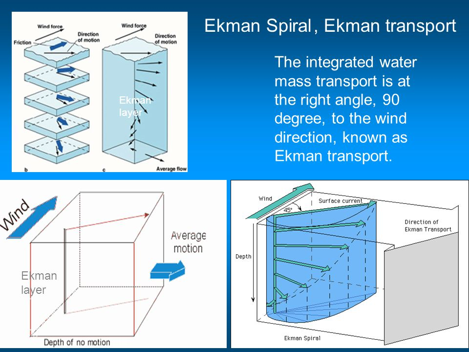 , Ekman transport Ekman layer Ekman layer The integrated water mass transport is at the right angle, 90 degree, to the wind direction, known as Ekman