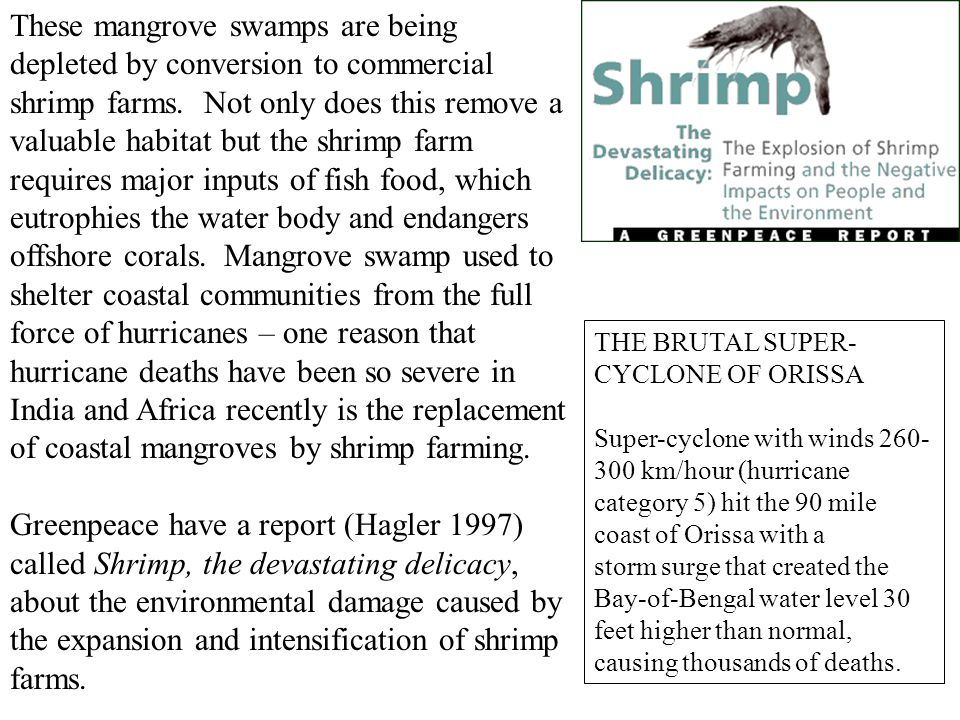 These mangrove swamps are being depleted by conversion to commercial shrimp farms.