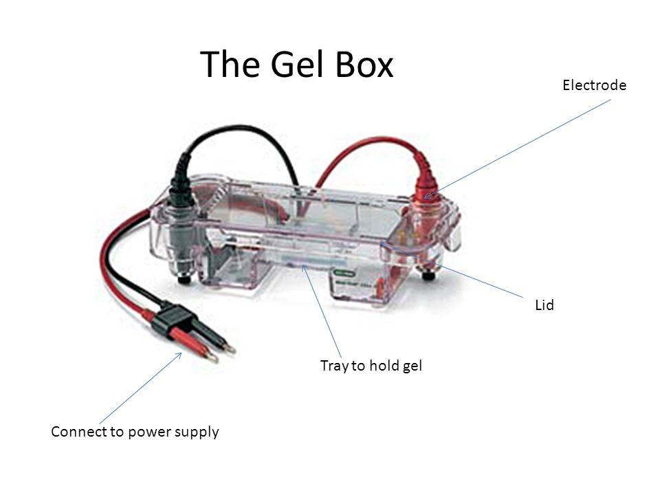 The Gel Box Electrode Lid Tray to hold gel Connect to power supply